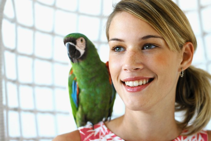 What Is the Most Affectionate Parrot?
