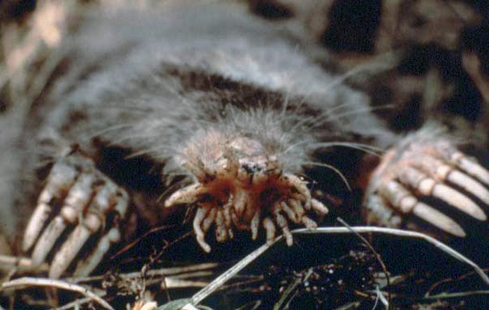 10 Pennsylvania Animals That Come From Nightmares