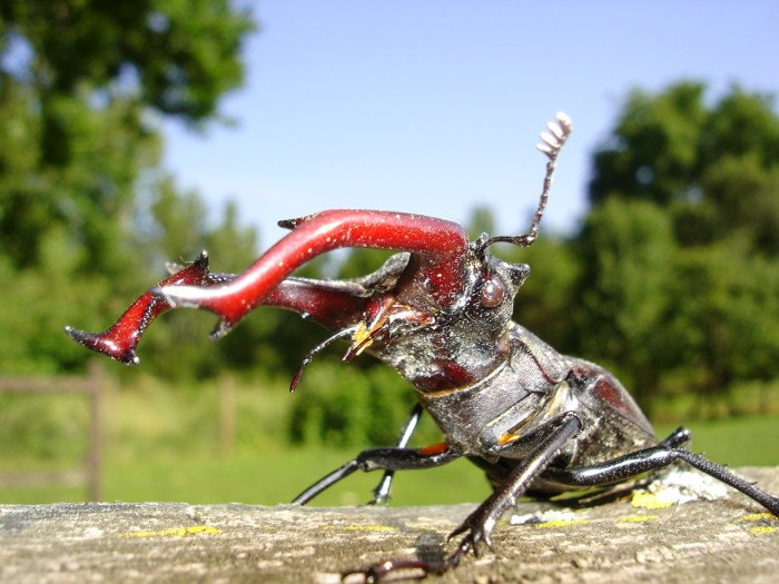 15 Creepy Bugs Found In Ohio