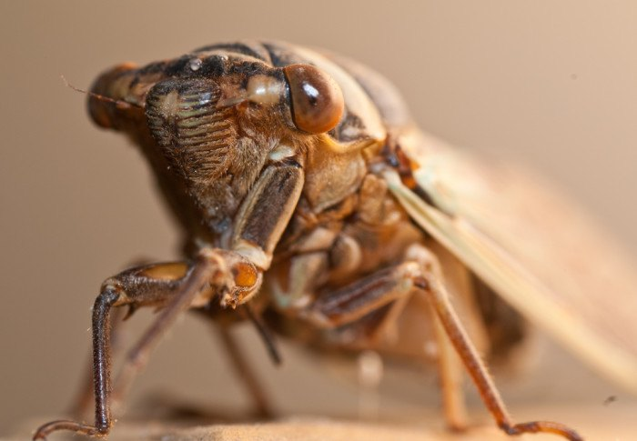 These 10 Bugs Found in Arizona Will Send Shivers Down Your Spine