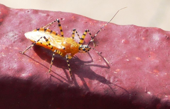 10 Totally Creepy Bugs Found In Nebraska