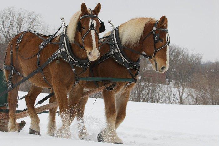 Horses - Crazy laws in South Dakota