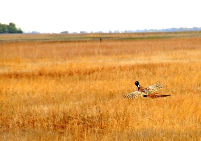 Sand Lake Wildlife Refuge