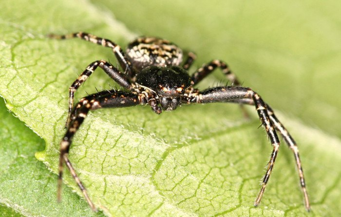 The 10 Biggest, Deadliest Bugs and Insects in Idaho