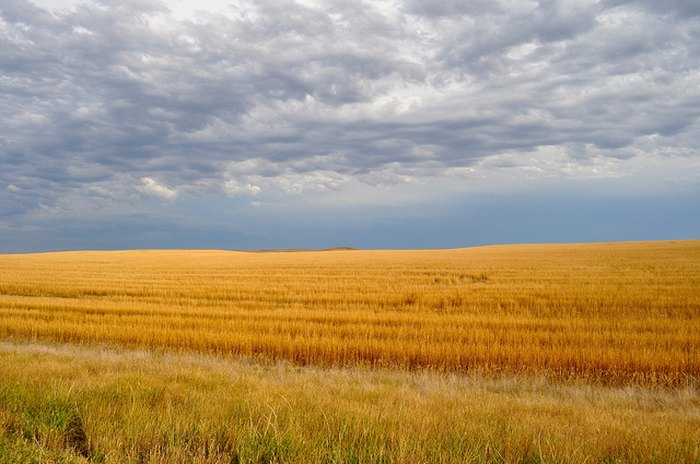 Fields in South Dakota