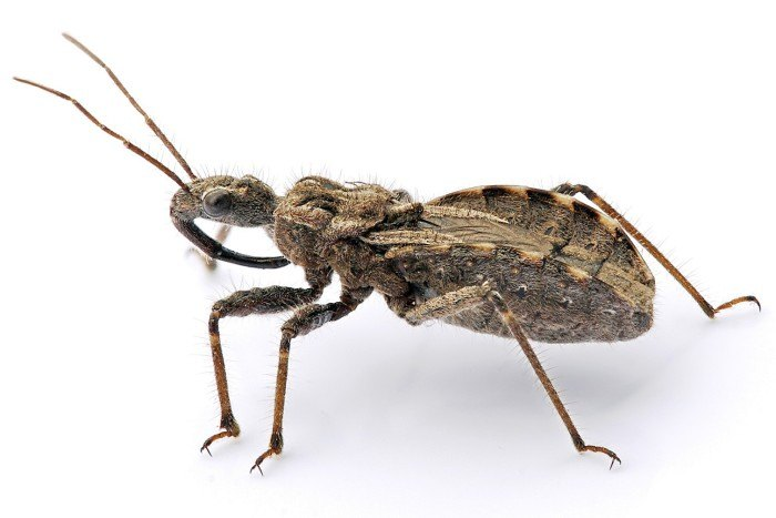 10 Bugs Found In North Dakota That'll Creep You Out