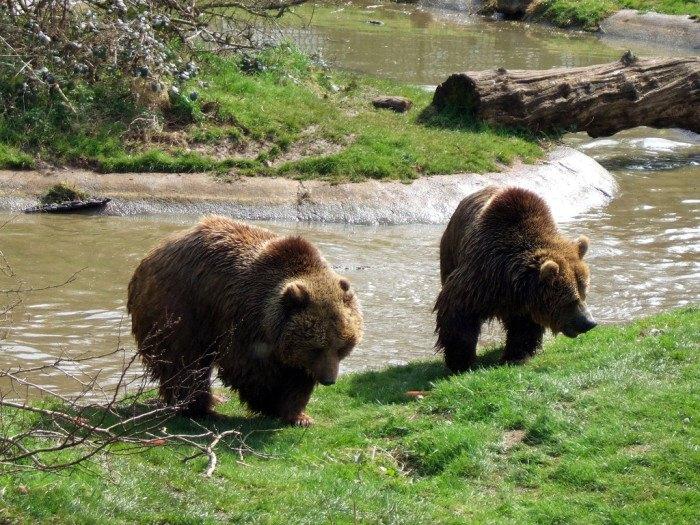 Idaho Bucket List - Bear World