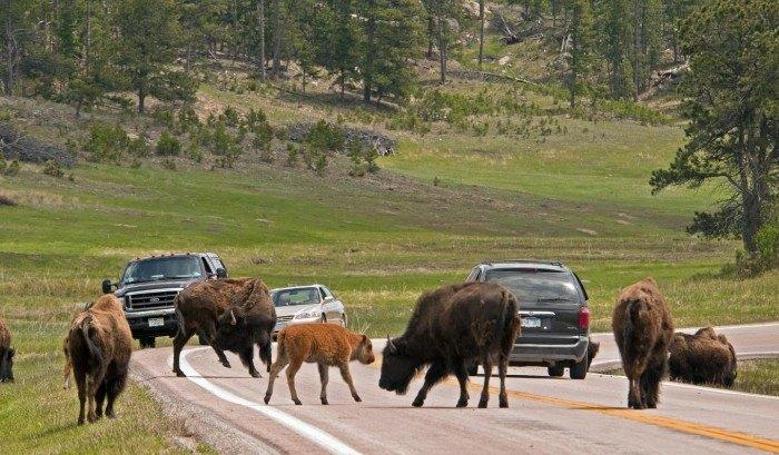Wildlife Loop State Scenic Byway