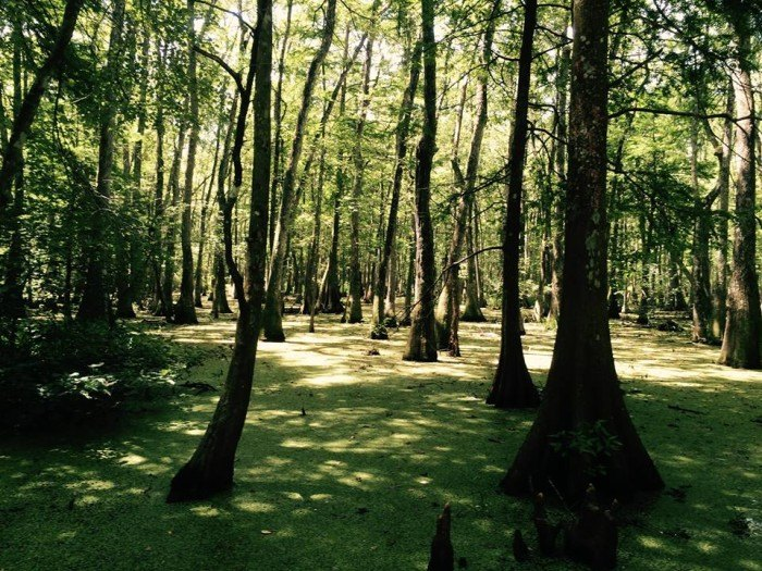 7 Best Places for Camping In New Orleans