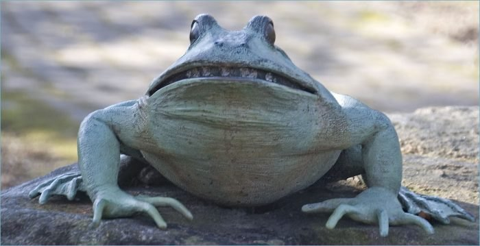 Winterthur Frog