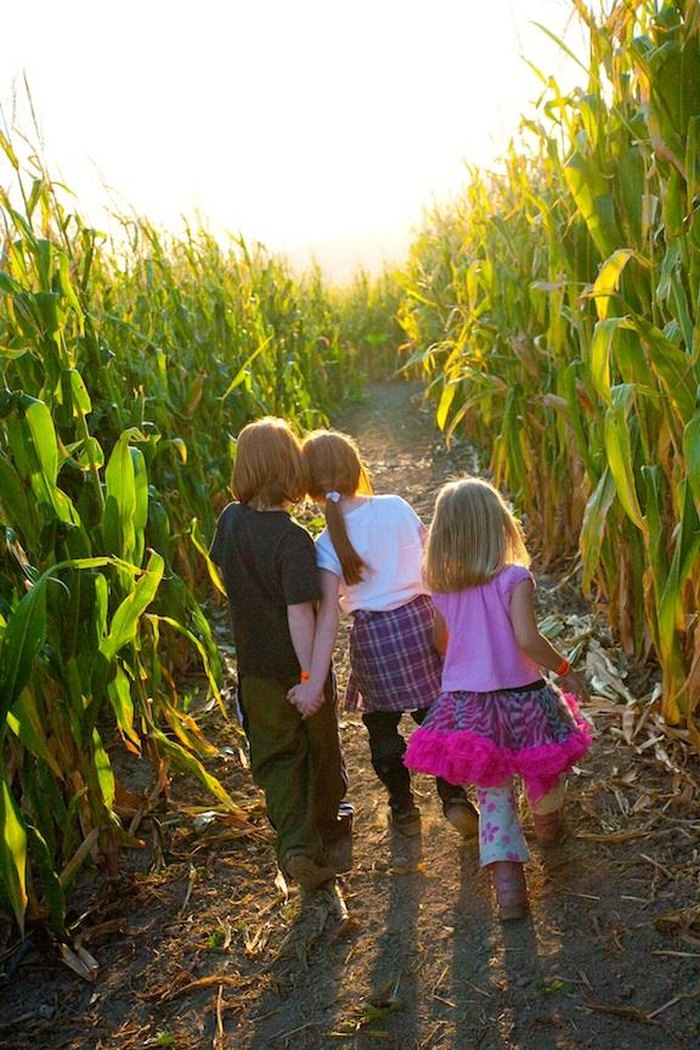 The 8 Best Corn Mazes In Utah 2016