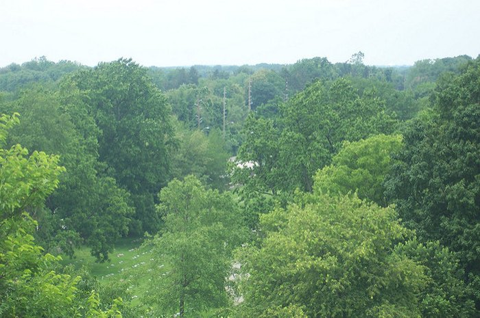 This Forest Has Some Of The Oldest Trees In Indiana