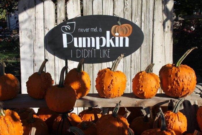 Idaho Pumpkin Patch