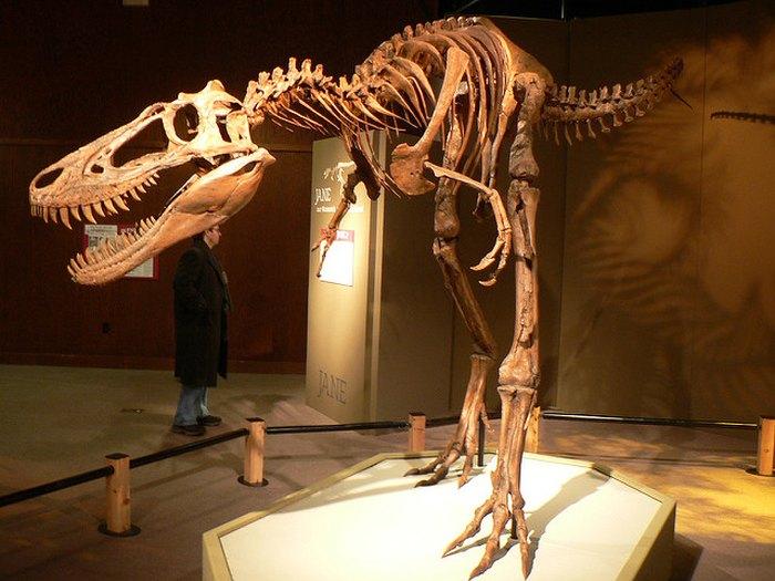 T-Rex skeleton CMNH - Free lectures
