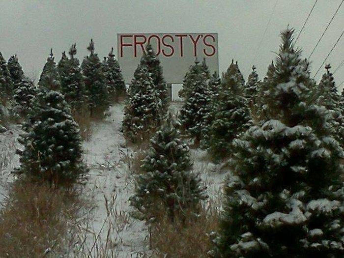 Fresh Christmas Trees Near Me.11 Places To Get Fresh Live Christmas Trees In Nebraska