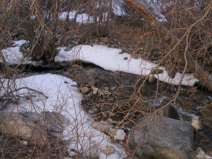 Lehman Creek Trail