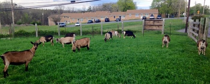 You'll Want To Visit Shepherd's Whey Creamery Cheese Farm In West