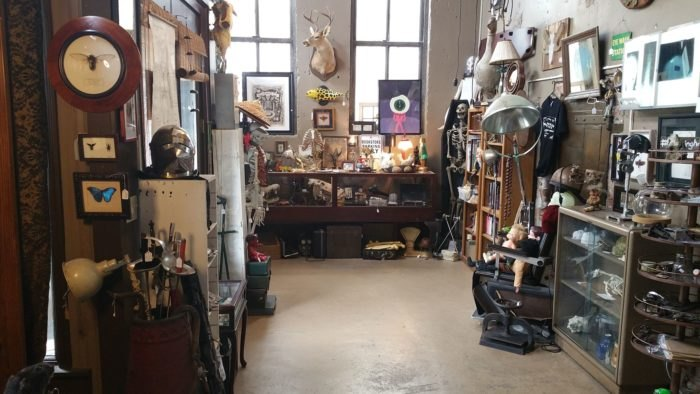 Birmingham Oddities Is The Craziest One-Of-A-Kind Store In