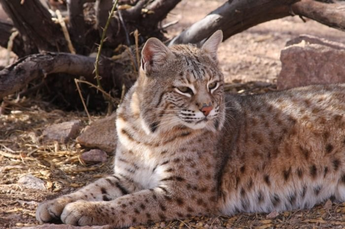 This Exotic Animal Sanctuary In Arizona Is An Incredible