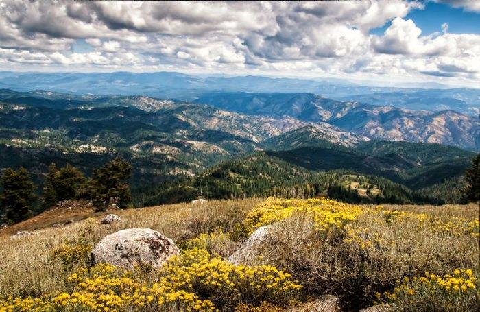 Idaho's Best Wildflower Trails: a Road Trip