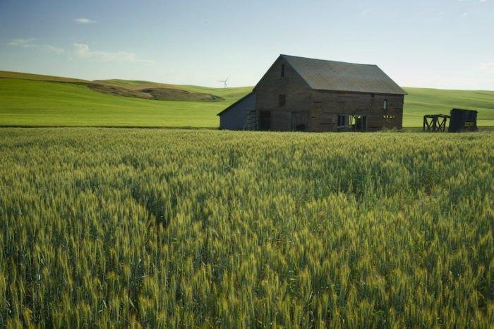 Canola Fields in Bloom in Idaho - A bucket list sight!