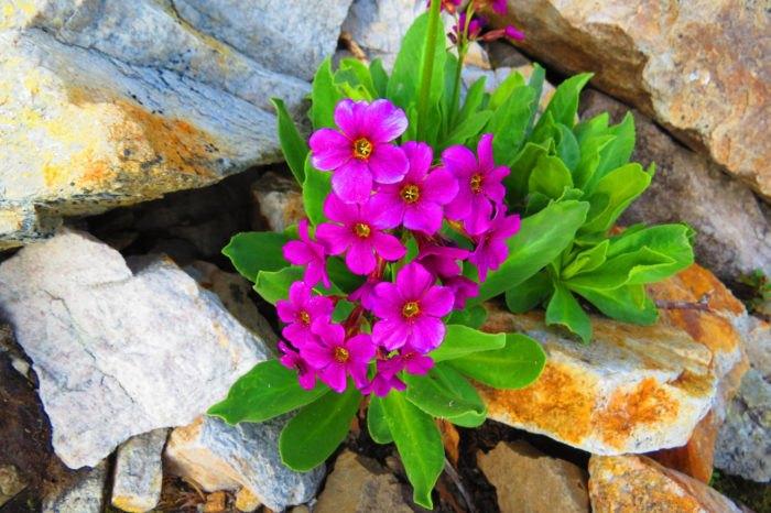 Idaho's Best Wildflower Trails