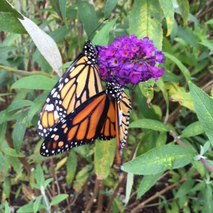 You'll Want To Plan A Day Trip To Maine's Magical Butterfly