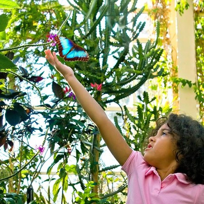 Visit The Magic Wings Butterfly House Museum of Life +