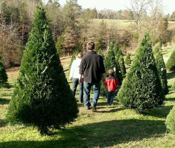 Lebanon ohio christmas tree farm