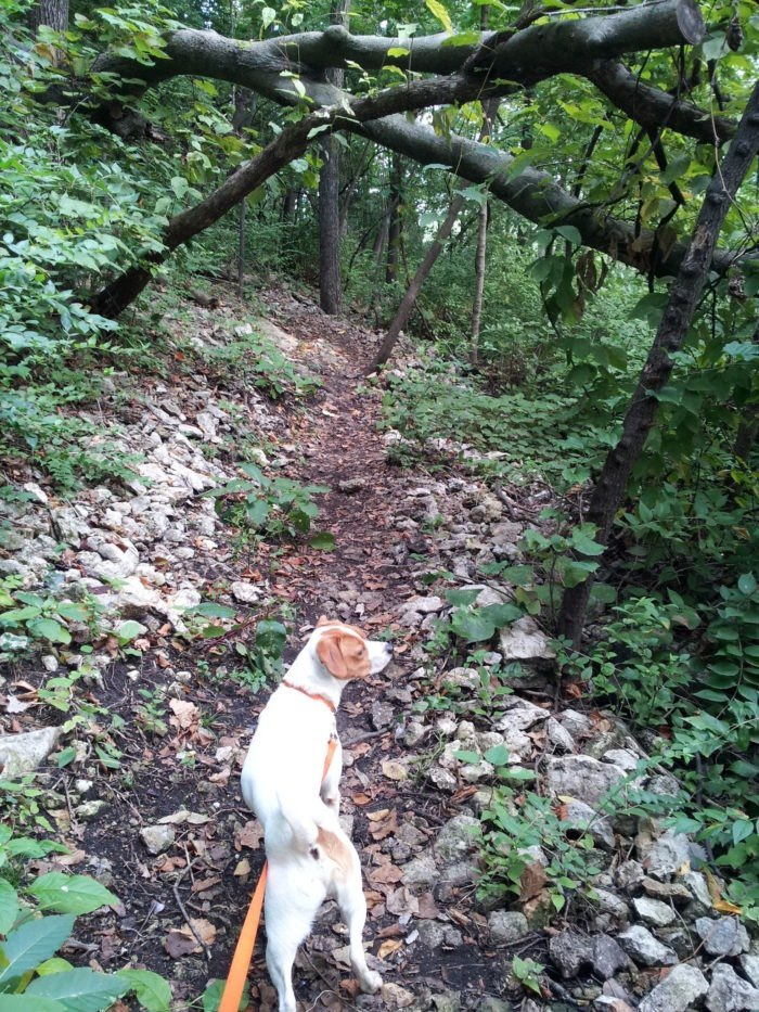 11 Best Bike Trails In And Around Kansas City | Only In Your
