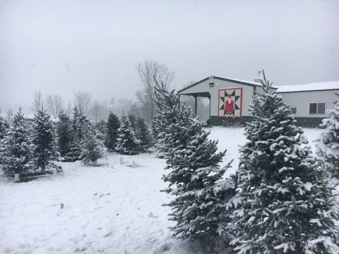Millers Christmas Tree Farm.Cut Your Own Tree At These 13 Wisconsin Christmas Tree Farms