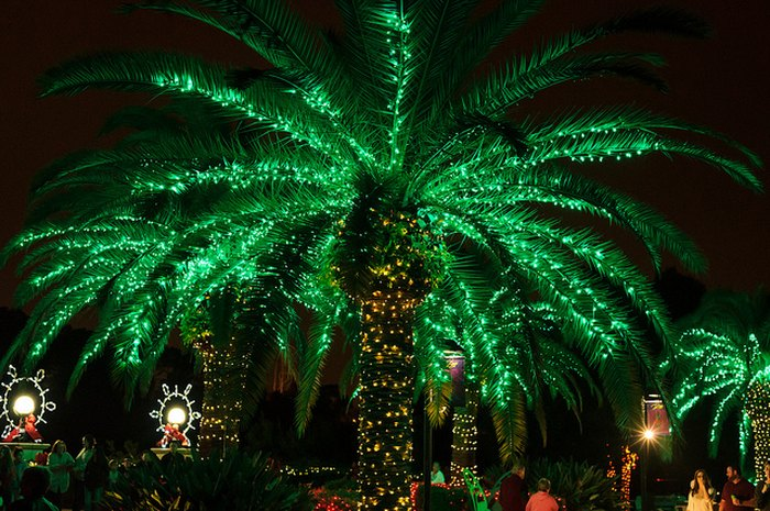 Christmas In Florida Images.10 Reasons Christmas In Florida Is The Absolute Best