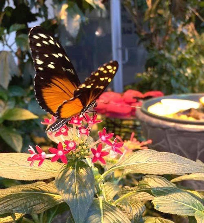 Puelicher Butterfly Wing Is Milwaukee's Best Butterfly House