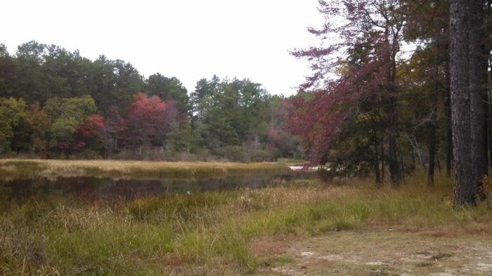 The Spookiest Hike In Texas Is At Boykin Springs In Jasper