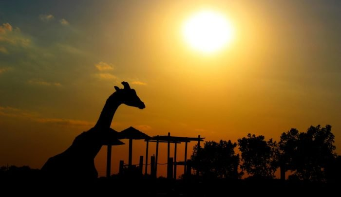 The Wildlife Park In Kansas Your Whole Family Will Love