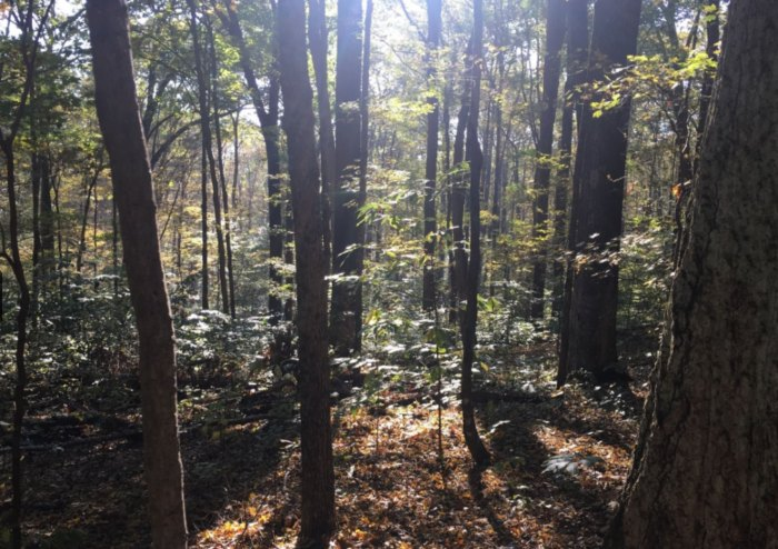 A Hike Through Pioneer Mothers Memorial Forest in Indiana Leads To