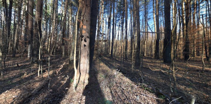 Yellowwood State Forest in Indiana Is Full of Storybook Beauty