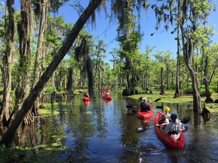 Swamp Tour New Orleans >> 9 Incredibly Fun Swamp Tours Around New Orleans To Take This