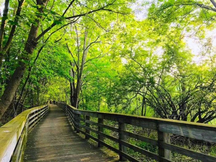 The Magical Charles River Esplanade Walk In Massachusetts Is A