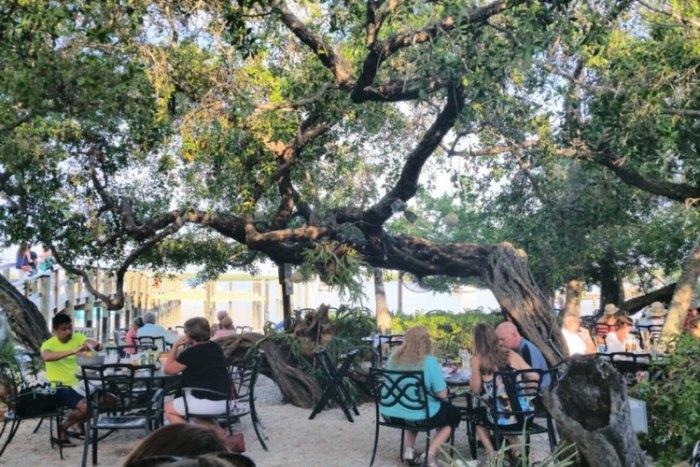Dine Among The Banyan Trees At Mar Vista Dockside Restaurant
