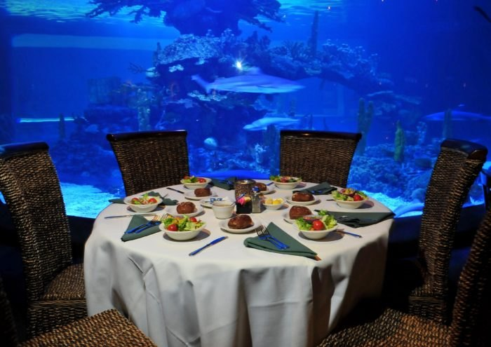 Dine With The Sharks At This Arizona Restaurant That's One