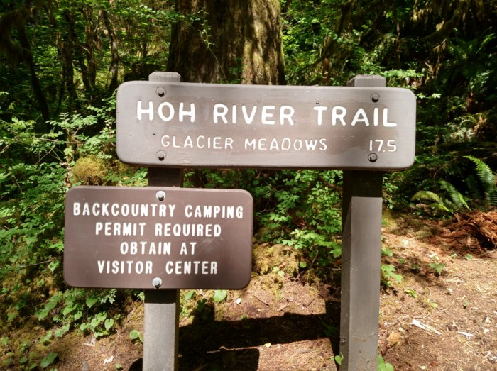 The Hoh River Valley Is The Quietest Place In America