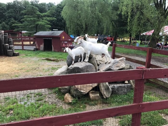 Silverman S Farm Has A Magical 5 Acre Connecticut Animal Park In Easton