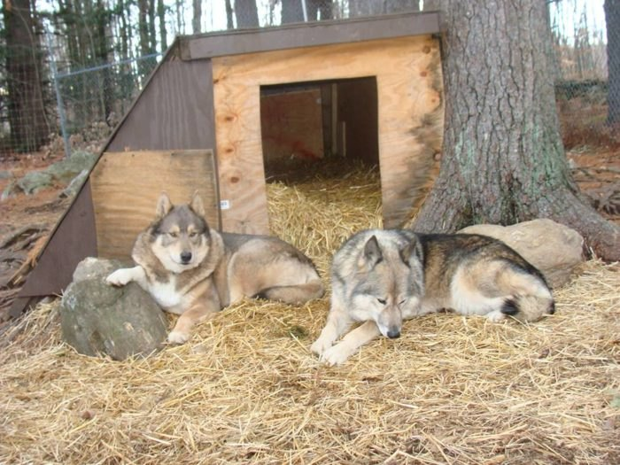 Not Many People Know About This Wolf Sanctuary Right Here In Maine
