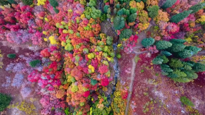 The Gorgeous Footage Of Utah's Fall Foliage That Will Leave You In Awe