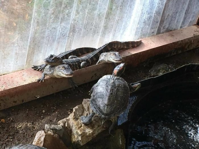 The Colorado Gators Reptile Park Is Home To The Most Unique Animals
