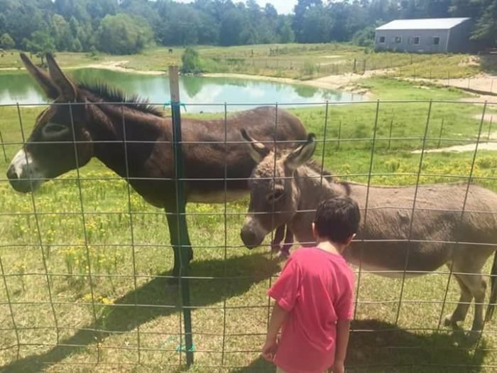 A Visit To Cotton Branch Farm Animal Santuary In South