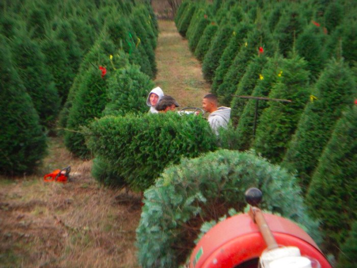 Oregon Christmas Trees.Get Your Christmas Tree From One Of These Tree Farms In Oregon