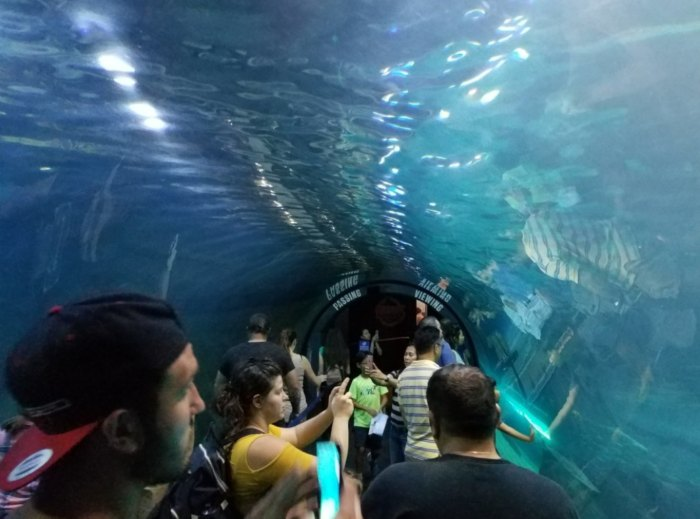 Tallest Underwater Christmas