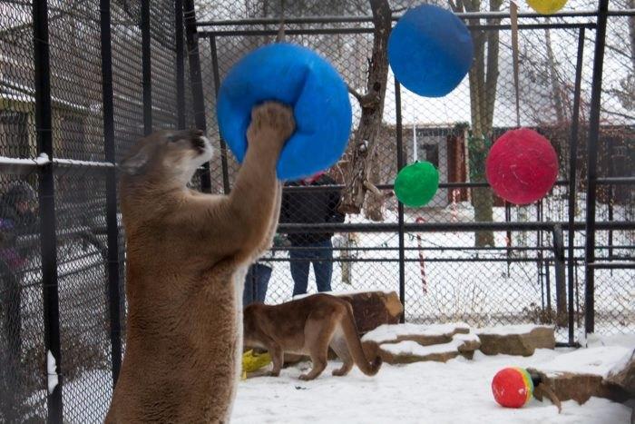 Wildwood Zoo In Marshfield Is The Perfect Wisconsin Winter